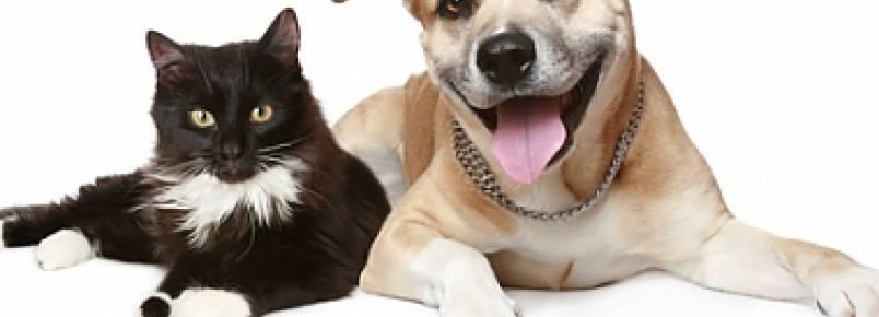 Feira alerta para a importância da adoção responsável de animais