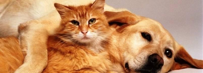 Projeto de lei garante destino digno a animais maltratados e resgatados