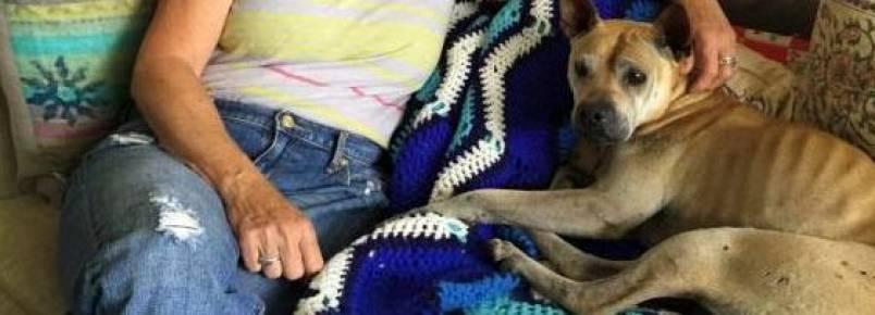 Cachorra perdida percorreu mais de 50 km até encontrar sua casa