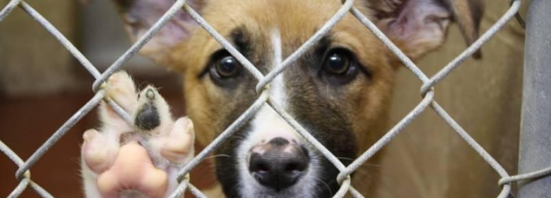 Após polêmica, Conselho suspende multa a veterinário que atendia animais de rua