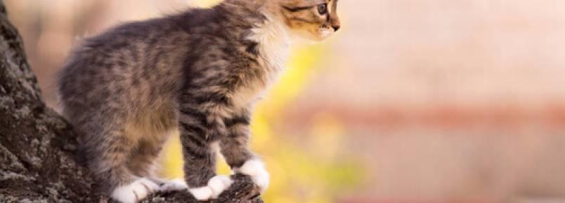 Por que os gatos caem sempre de pé?