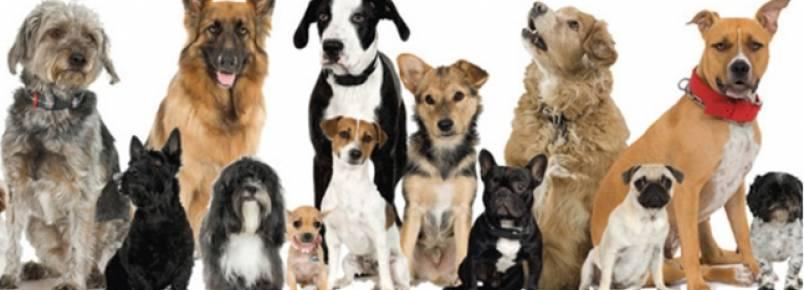 Vem aí: 6º Encontro de Cães de Itabira