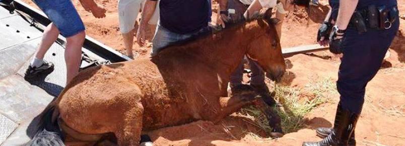 GCM e populares resgatam cavalo picado por cobra, em Botucatu