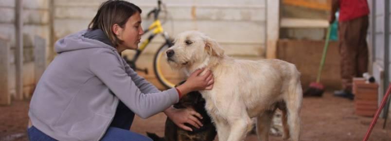 """ONG pede """"socorro"""" para cuidar de 355 animais de rua"""
