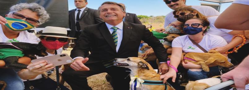 Bolsonaro visita tenda de adoção de cães e gatos perto do Alvorada