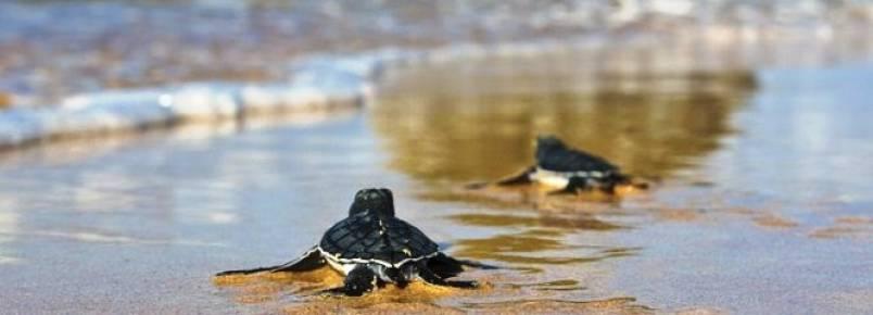 Projeto Tamar protege 2 milhões de tartarugas em oito estados