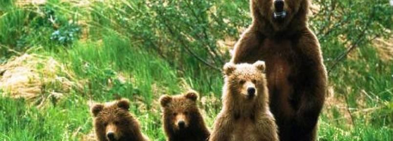 Movimento Rewilding quer criar condições para regresso de ursos e abutres a Portugal
