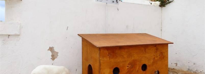Albufeira instala abrigos de madeira para acolher colónias de gatos