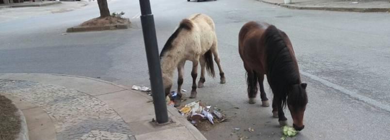 Moradores de Nogueira denunciam maus tratos aos cavalos da região