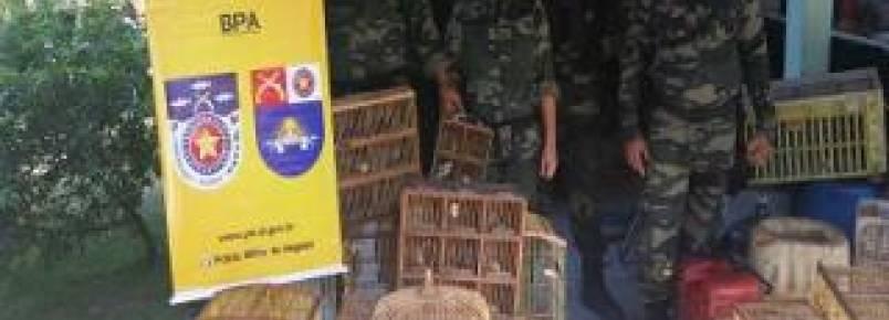 Operação do BPA resgata dezenas de animais silvestres na grande Maceió