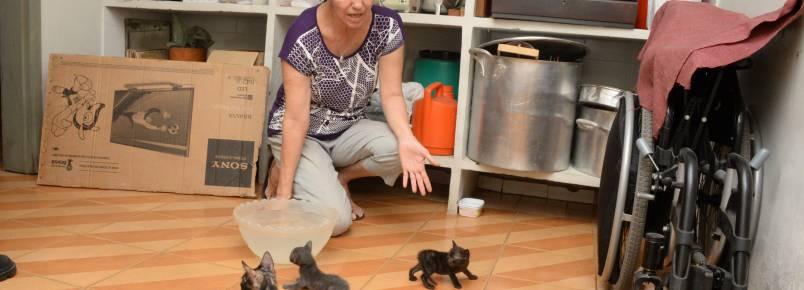 Moradores denunciam abandono de animais em praças do Parque Piauí