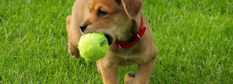 Pesquisa revela as 10 atividades preferidas dos cães