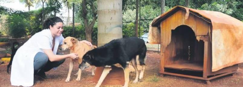 ONG Vira Lata Vira Vida intensifica adoção de animal à distância