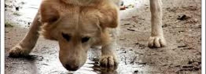 Com crise e férias, abandono de animais cresce 50% em Campinas