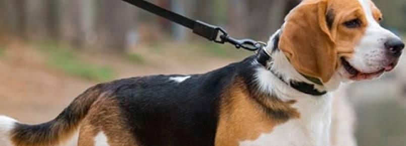 Adestre seu cão em 5 passos