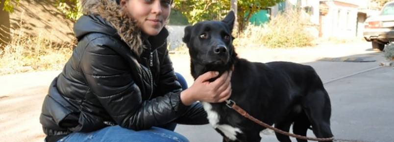 Cachorra anda 300 km para encontrar mulher que a ajudou após atropelamento