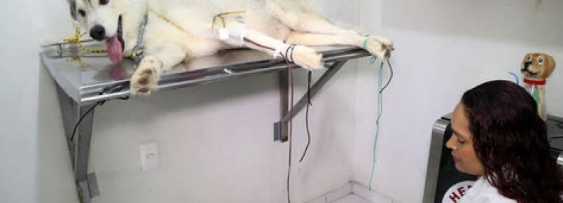 Clínica veterinária local tem o primeiro banco de sangue animal de Manaus