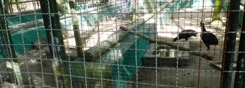 Parque da Cidade: ONG denuncia maus-tratos a animais