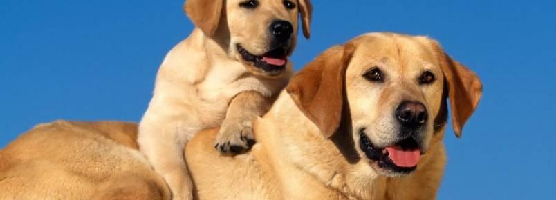 Entender emoções de animais ajuda a tratar depressão