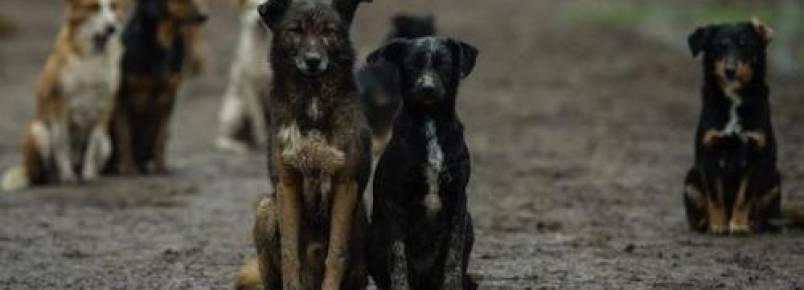 Protetor luta para manter abrigo que é casa para mais de 450 cães na Sérvia