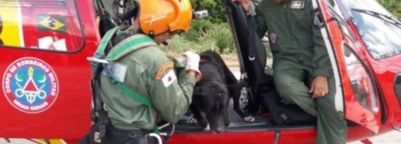 Cão é resgatado de helicóptero pelo Corpo de Bombeiros