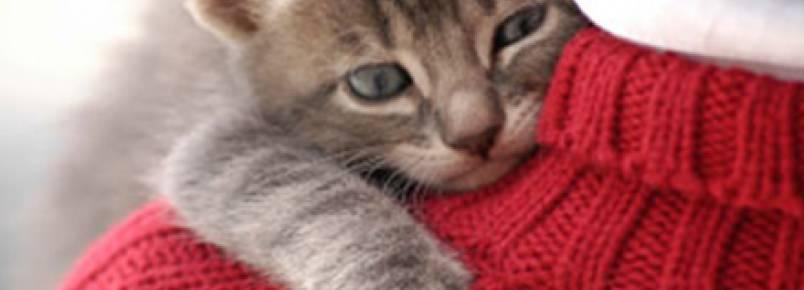 Estudo quer descobrir quem ama mais os donos: gatos ou cães?