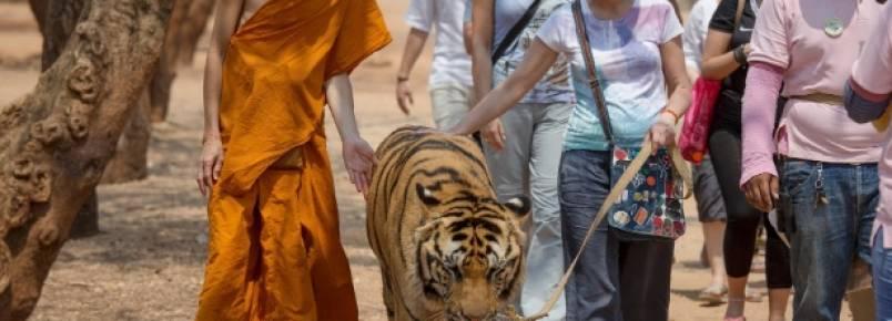 Tailândia tenta impedir monges de lucrarem com tigres em zoo improvisado em templo