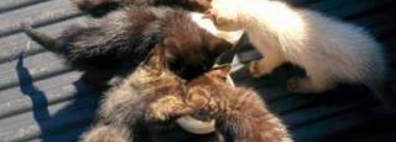 Moradores e protetores denunciam descaso das autoridades públicas com animais de rua