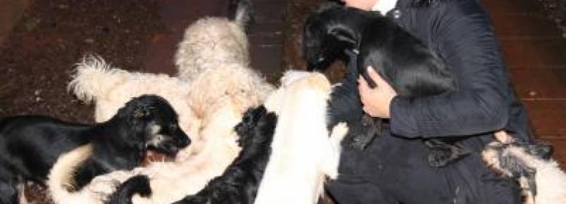 Mulher mantém 28 cachorros em casa e pede doação de ração