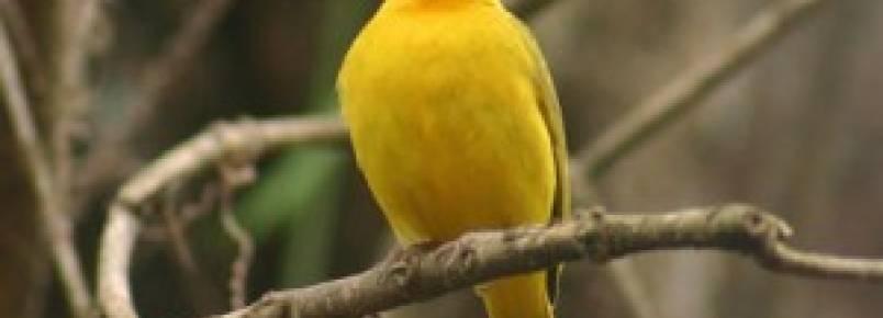 Homem multado em R$ 9 mil por criar aves sem licença