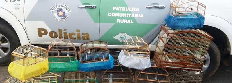 Polícia Ambiental apreende 12 pássaros e aplica R$ 6 mil em multa