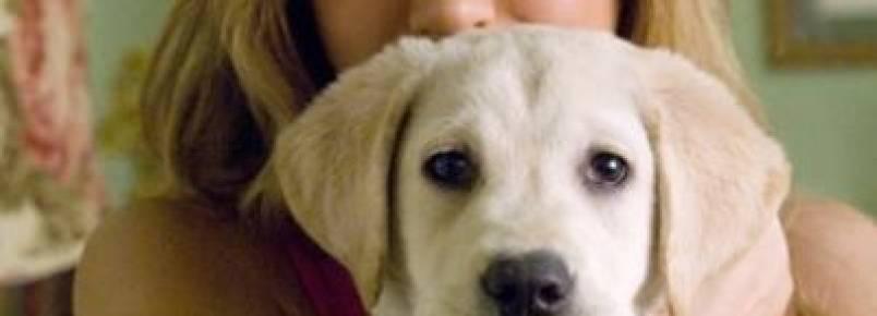 10 cães de cinema inesquecíveis