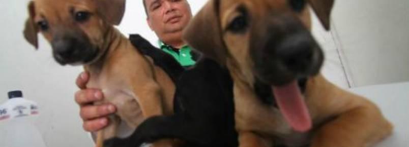 Veterinário recolhe animais abandonados na Zona Oeste do Recife