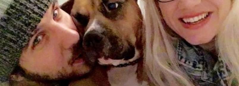 Cão impede um assalto em seu lar temporário e é adotado pela família
