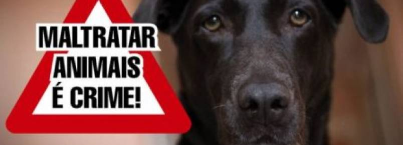 Agora é lei municipal: maus tratos a animais dará multa em Taubaté