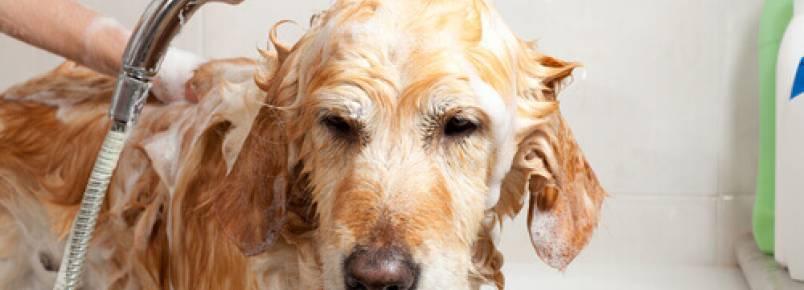 9 curiosidades sobre o banho dos cães