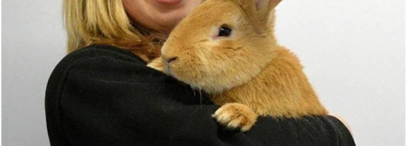 Abandonado pelo dono, coelho gigante busca novo lar na Escócia