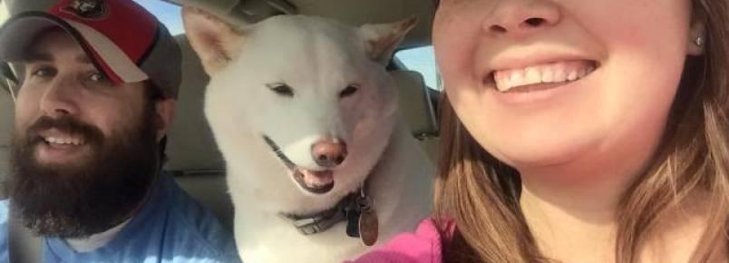 Cachorra adotada demonstra sua alegria com sorrisos