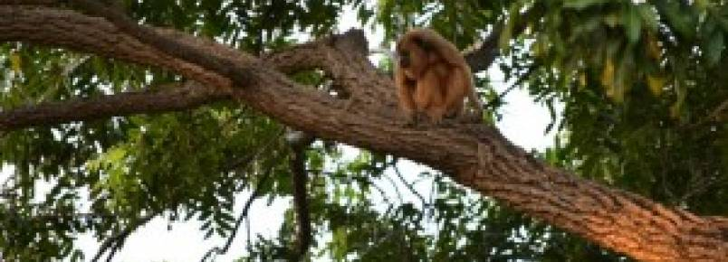 Desmatamento em área verde do município de Paraíso poderá acarretar no desaparecimento dos últimos animais