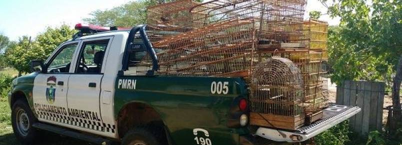 Polícia ambiental faz apreensão de diversos animais silvestres na zona rural de Caicó