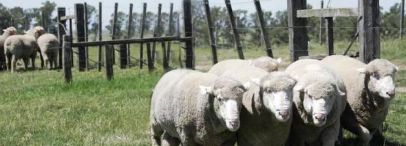 Projeto quer proibir sorteio e uso de animais como brindes em Caxias do Sul