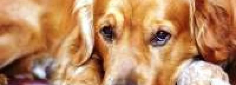 Como saber se meu cachorro tem filariose