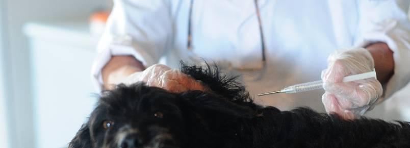 Faltam veterinários na Diretoria de Bem-estar Animal