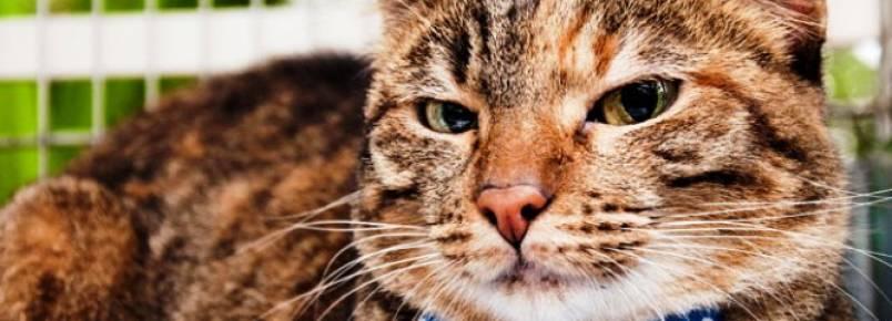 Feira de Adoção de Pequenos Animais tem 11 cachorros e cinco gatos