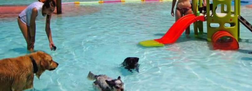 Conheça um resort feito especialmente para cachorros na Espanha