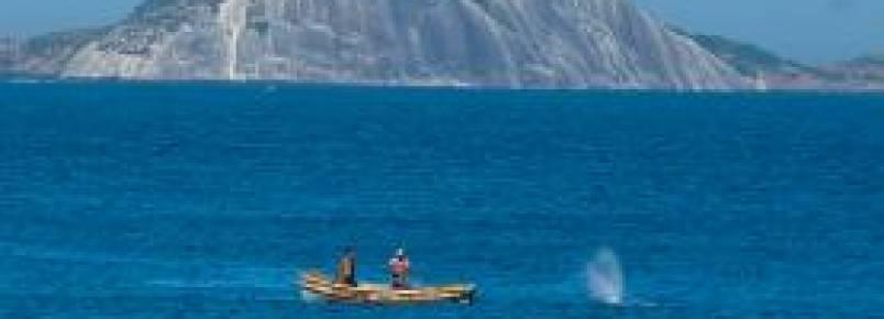 Pescadores libertam baleia presa em rede na Praia do Leme