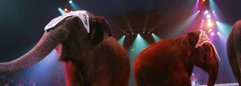 Campanha quer dar nova vida a animais do circo