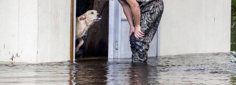 Cachorro é abandonado por tutor durante enchente, mas sobrevive ao ser resgatado por outra pessoa