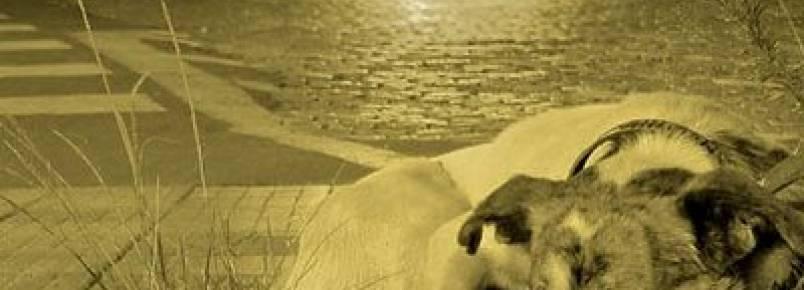 Juíza garante melhor tratamento a animais abandonados em Rondonópolis