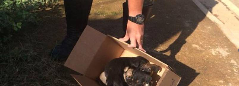 Preso por abandonar cinco filhotes de cão deixa cadeia após pagar multa de R$ 6 mil